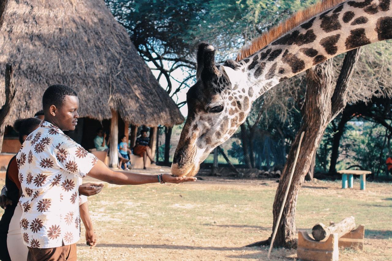 Safari Kenia Anbieter